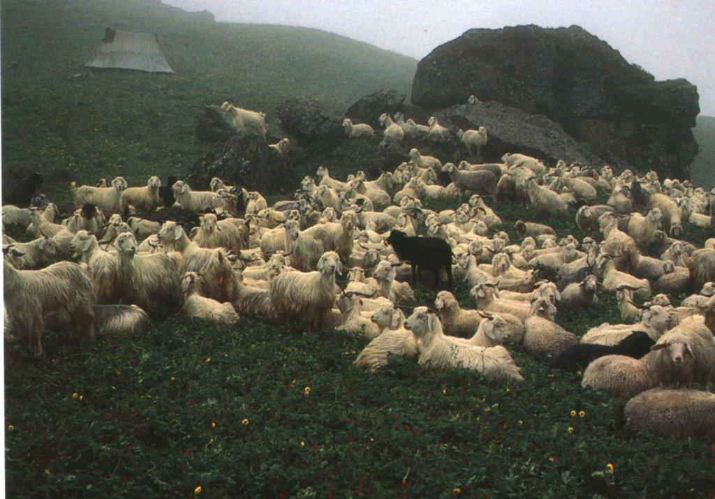 flocks1