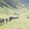 Capacity Building and Training through Mountain Shepherds